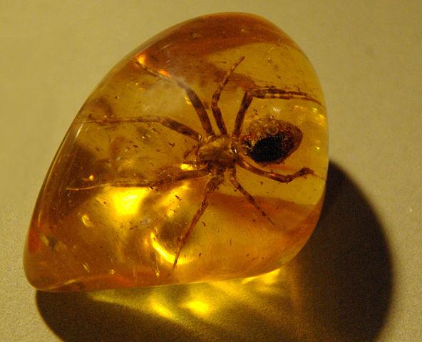 Spider_in_amber_(1).jpg