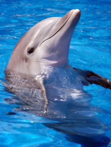 bottlenose-dolphin-picture-2-480.jpg