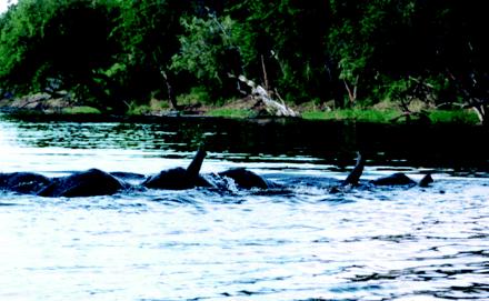 elephantswim.jpg