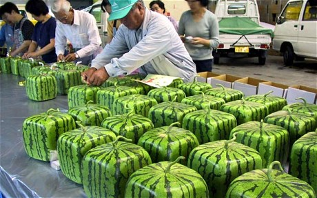 square-watermelon_1978388c.jpg