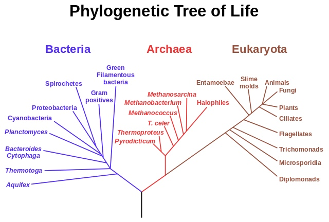 640px-Phylogenetic_tree.jpg