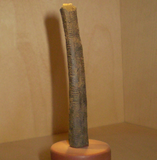 Is The 20 000 Year Old Ishango Bone The Earliest Evidence Of Logical Reasoning Realclearscience