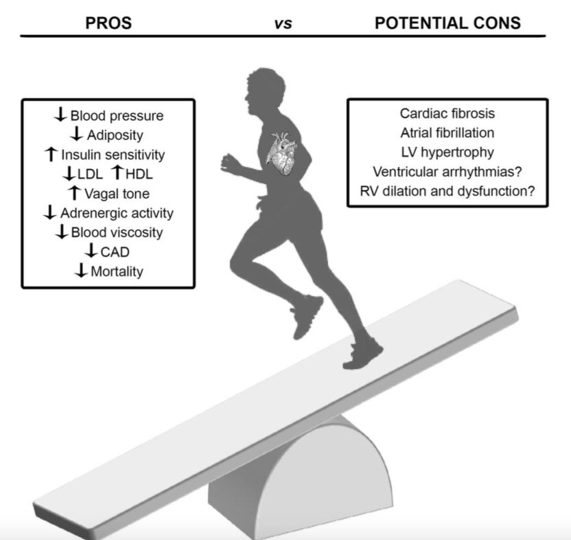 No, Marathons Do Not Shorten Your Lifespan - RealClearScience